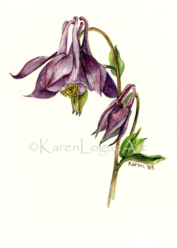 Photo of Purple Columbine2