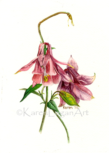 Photo of Pink Columbine2